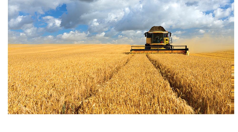 eagle graphic